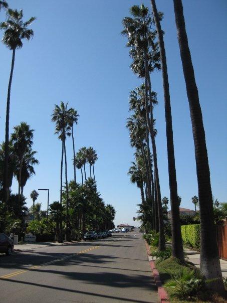 Palm tree paradise.
